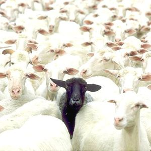 Black Sheep - InnervisionsEradio mix - March 12