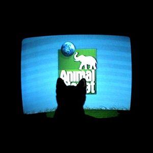 Krem - Animal Planet (2010)