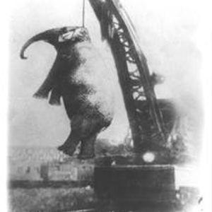 The hanged Elephant - Was hatter gesagt?
