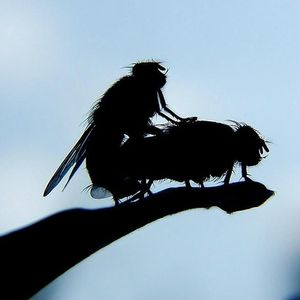 #027 The Fly