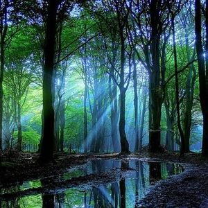 The Enchented Forest