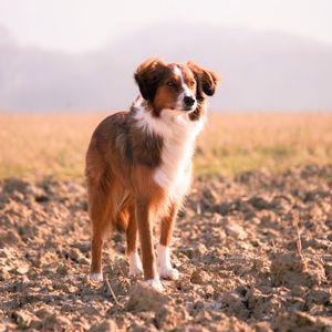 GVP #31: Do Pets go to Heaven?