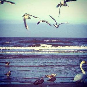 SEA&BIRDS - DUBTECHNO