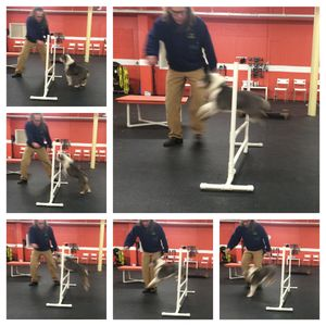 What Would Jeff Do 2/21/15 How to Dog Training Solid K9 Training