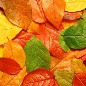 My_October's_Mix