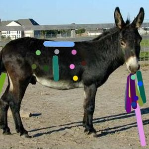 donkey filter