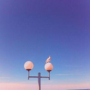 Summer Vibes: Nu-Disco, Chillwave & Indie Dance