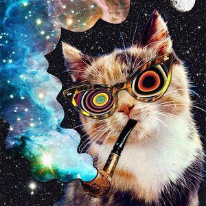 CAT#03