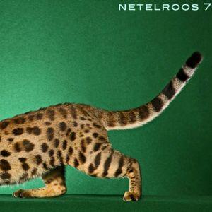 NETELROOS 7