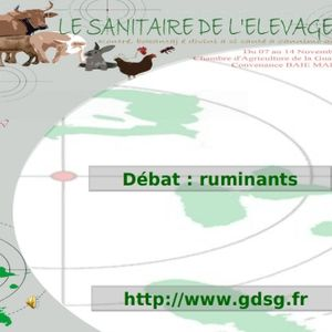 débats_ruminants