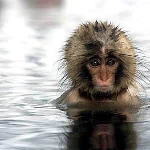 Aquatic monkey lover