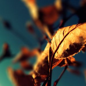 Autumn Deep House Mix - October 2015 [Mixed by Mvii]