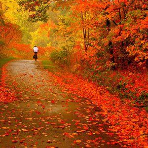 Four Floors Of Autumn