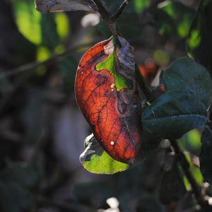 Always Autumn by Paul Asbury Seaman