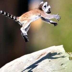 Twelve Monkeys- October Mixtape- The Lemur