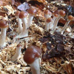 Mycelial Magic ~ Shamanatrix Live At Cumberland Fungus Festival 2020, ft Tamsin Smith