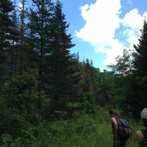 Ep. 63 - In Search of an Appalachian Bog