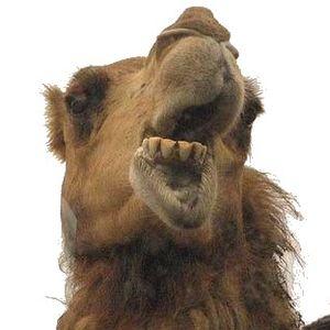 camel spit megamix