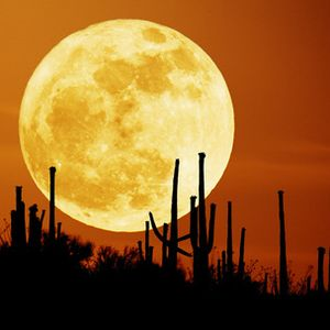 """ Sunset moon "" session"