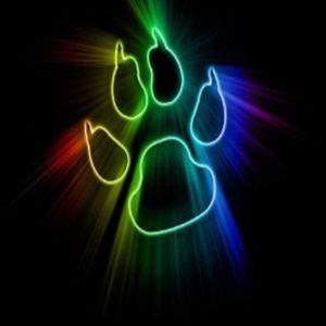 Bear Force 2012 part 2