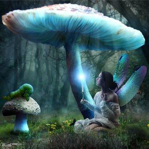 Dj Maze - Pixie Forest