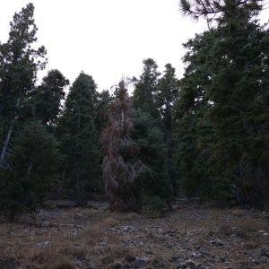 Skaņu mežs 21.04.15. // NOISE svaigumi