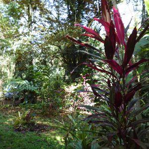 Costa Rica, évasion avec un guide tropical.