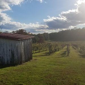 Wine Part 2: Touring VA Wine Country
