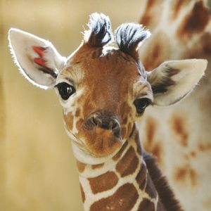 First mix in the whole wide world and heaven and space that I made.I like giraffes.
