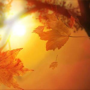 HotFader - Everybody loves autumn sunshine 2012