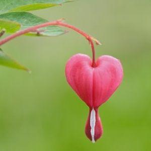 K-Rai - Bleeding Hearts DJ Mix