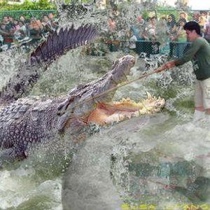 Giant Lizards shall soon rule the Earth - December 7th, 2010