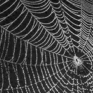 meaning of a noiseless patient spider