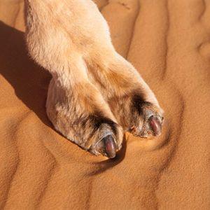 Camel Toe 2 Da Ground