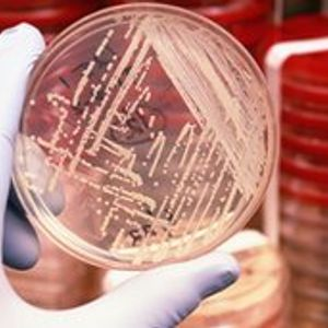 """Tech Talk- June, 14 2012 """"Microbes, Manure, and Scholarships"""""""