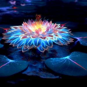 Evening Lotus - Episode #81