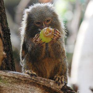 Twelve Monkeys- April Mixtape- The Marmoset