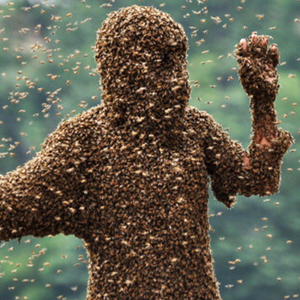196 - Killer Bees