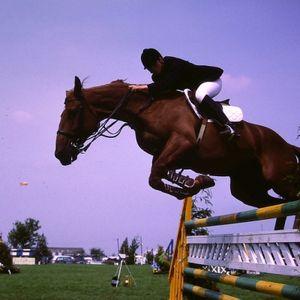 Zirgi sacensībās. Vislielākā slodze zirgam ir auļošanas sacensībās