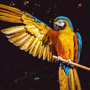 Parrot perroquet loro!