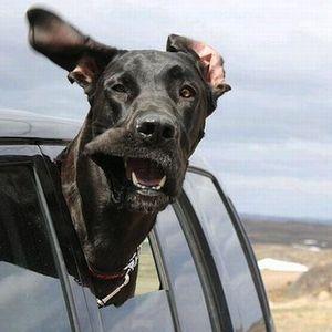 Mājdzīvnieku obligātā reģistrācija un čipēšana. Suņiem tā būs jāveic obligāti