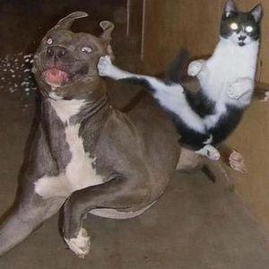 Hit Dog Prey