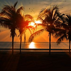 Palm Beach (Summer Mix 2018)
