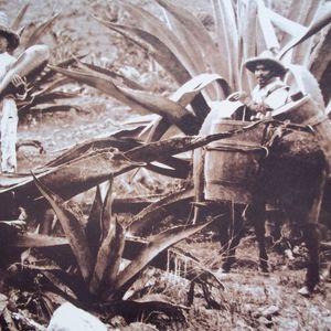La tierra en 1910