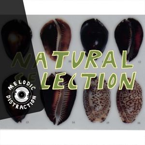 Natural Selection with Nu Tribe (September '19)