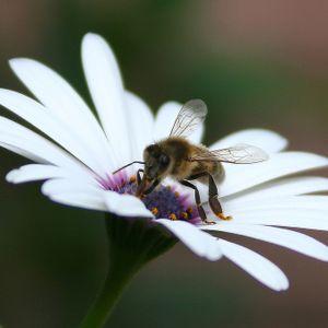 The Genetics of Bee-havior