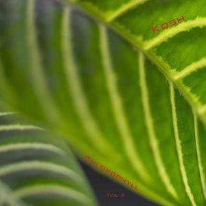 Chlorophyll Teil 3