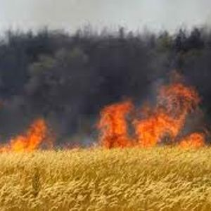 When God Sets Your Barley Field on Fire