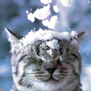 #winterwonderstyle