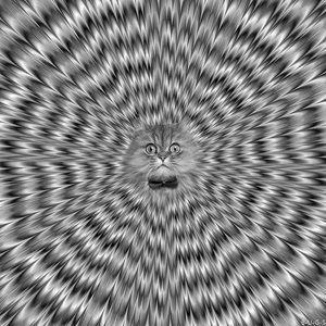 Daze2.0 - Catness